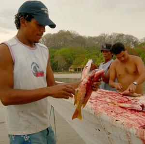 guttingfish.jpg