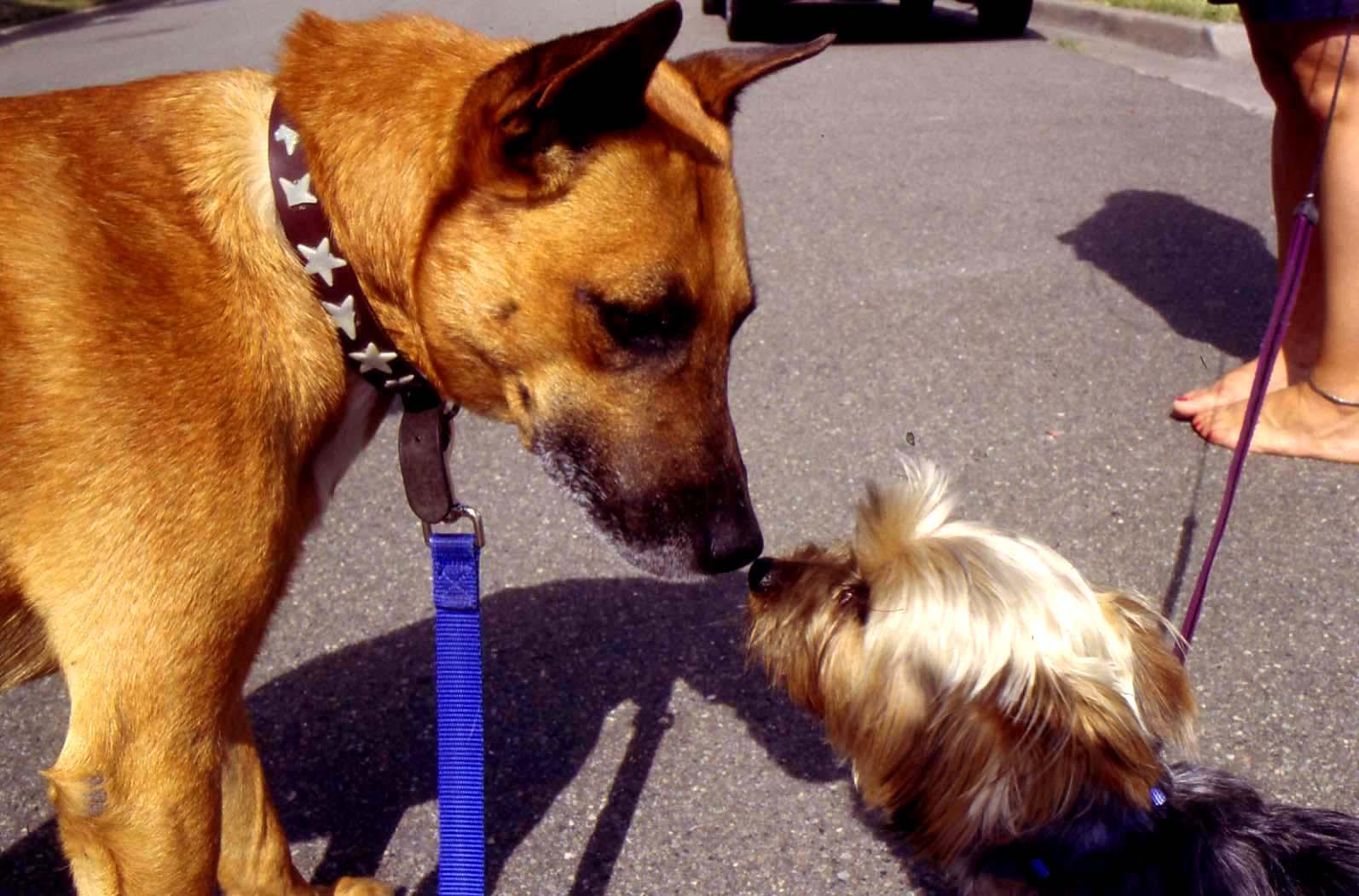 B&littledog.jpg